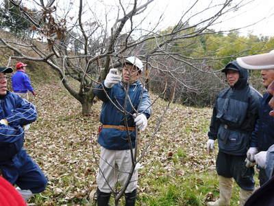 栗の木剪定の研修会に参加しました_a0254656_1615497.jpg