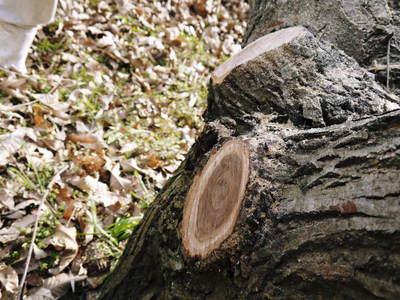 栗の木剪定の研修会に参加しました_a0254656_1640190.jpg