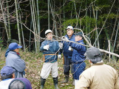 栗の木剪定の研修会に参加しました_a0254656_1655949.jpg