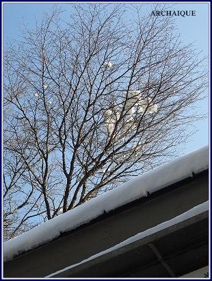 *店舗デザイン* ミモザガーデンカフェさん 雪です_c0207890_1362819.jpg