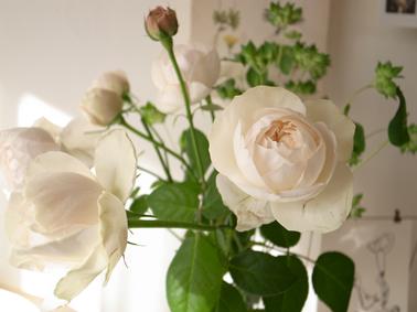 一足先に春の花_c0200002_10333738.jpg