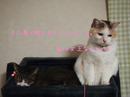 b0042310_1542981.jpg
