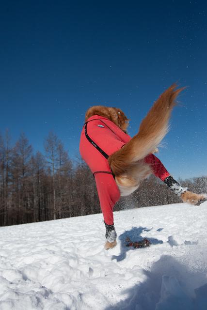 ジャンプするぜよ〜!_e0192921_18205827.jpg