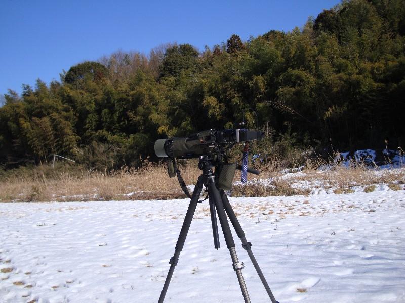 KOWA TE-11WZ 初撮りは青い鳥と黄色の小鳥_f0171028_1627192.jpg
