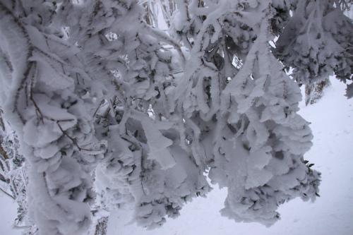 霧氷の高見山  1248m 奈良県_d0055236_11251631.jpg