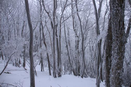 霧氷の高見山  1248m 奈良県_d0055236_11251844.jpg