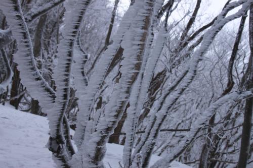 霧氷の高見山  1248m 奈良県_d0055236_11255231.jpg