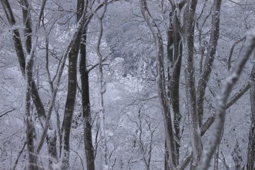 霧氷の高見山  1248m 奈良県_d0055236_11255758.jpg