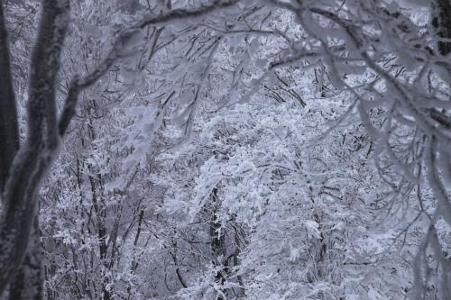 霧氷の高見山  1248m 奈良県_d0055236_11262454.jpg