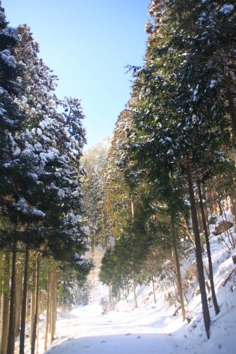 霧氷の高見山  1248m 奈良県_d0055236_11283960.jpg
