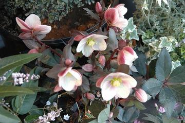 春のお花を楽しんで♪_e0130779_1351952.jpg