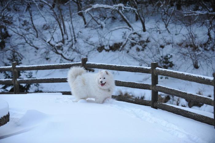 雪山へ♪_a0049296_9125182.jpg