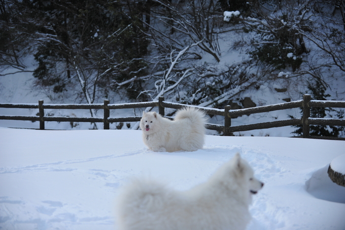 雪山へ♪_a0049296_9131097.jpg