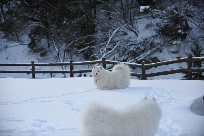 雪山へ♪_a0049296_9133484.jpg