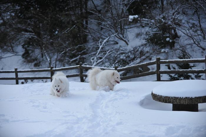 雪山へ♪_a0049296_9135338.jpg