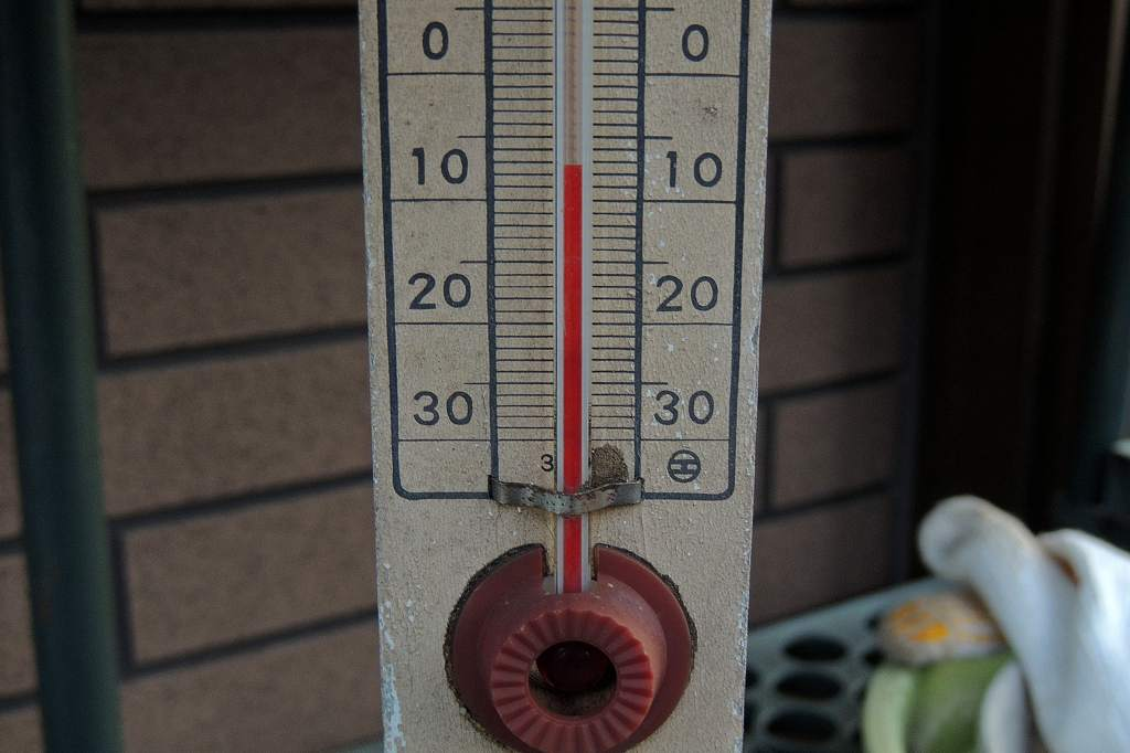 氷点下8度/か~~わいいモズ/今朝のアリスイ/富士山_b0024798_1316046.jpg