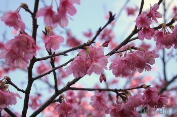 春を探して_c0176406_19433526.jpg