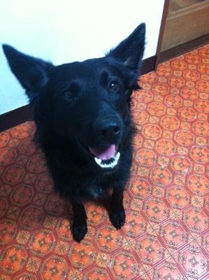 クロアチアから来た犬_d0290407_14593663.jpg