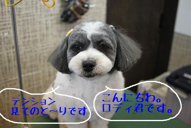 b0130018_0332092.jpg