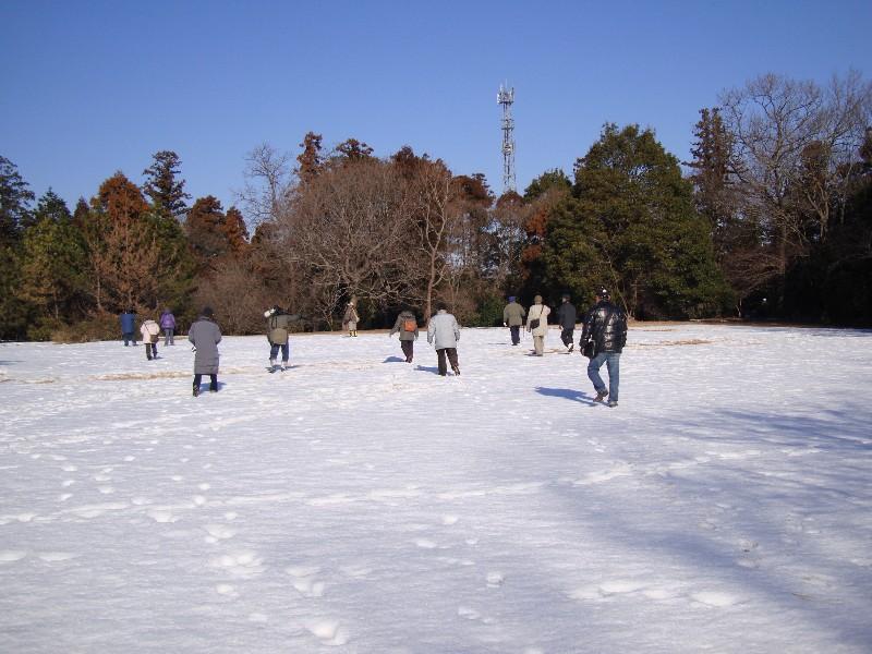 2013年1月定例探鳥会 森林公園~城址公園_f0171028_17154118.jpg
