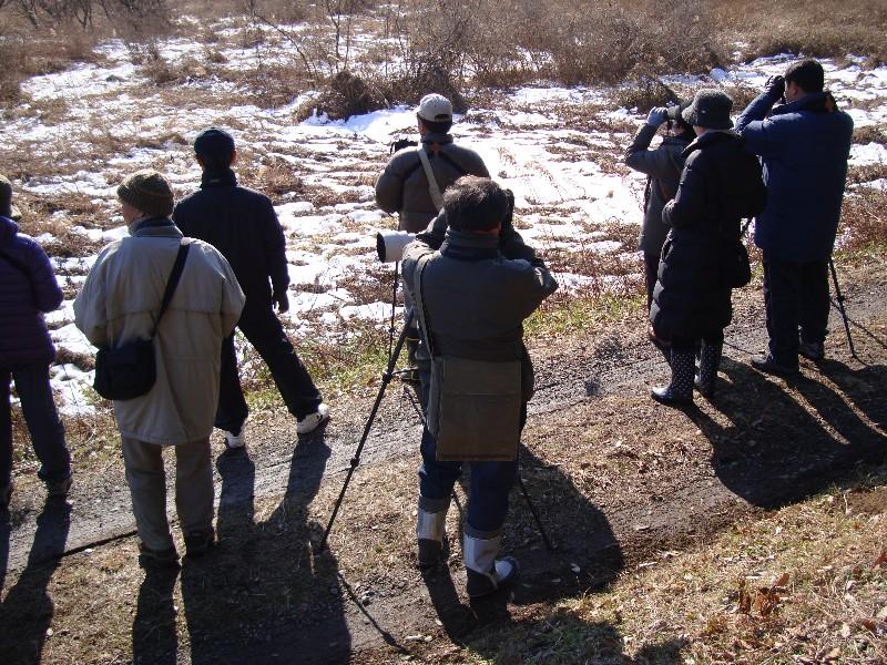 2013年1月定例探鳥会 森林公園~城址公園_f0171028_17171469.jpg