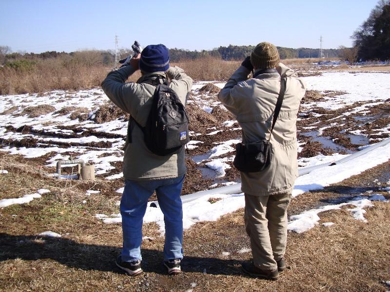 2013年1月定例探鳥会 森林公園~城址公園_f0171028_17172610.jpg