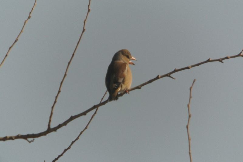 2013年1月定例探鳥会 森林公園~城址公園_f0171028_17241662.jpg