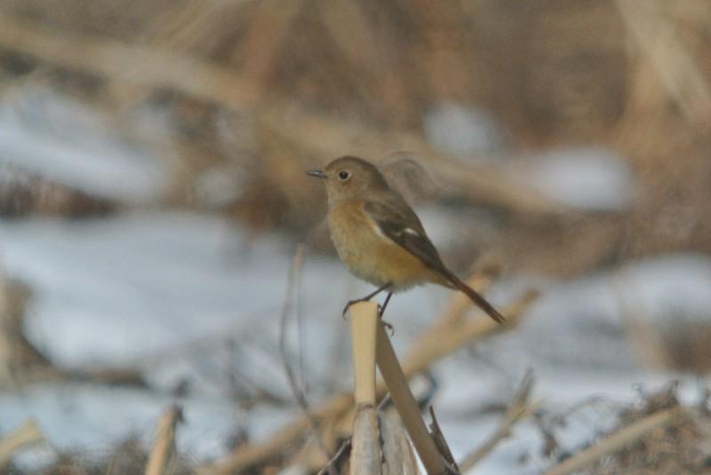 2013年1月定例探鳥会 森林公園~城址公園_f0171028_17242926.jpg