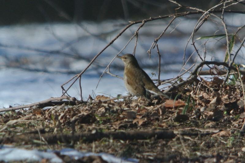 2013年1月定例探鳥会 森林公園~城址公園_f0171028_1724411.jpg