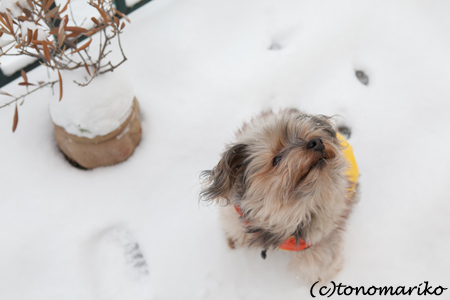 大雪パリ_c0024345_21512973.jpg