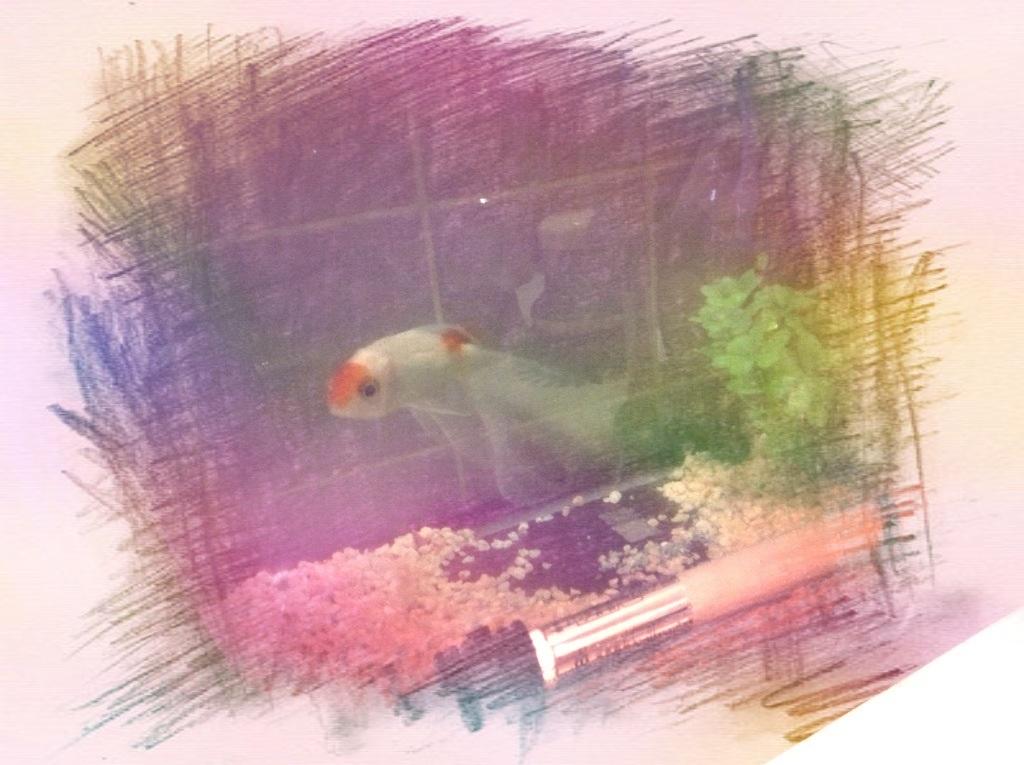 金魚のコメット君☆_f0183846_2111441.jpg