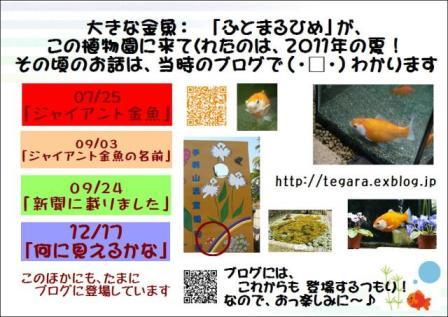 f0203094_13285561.jpg
