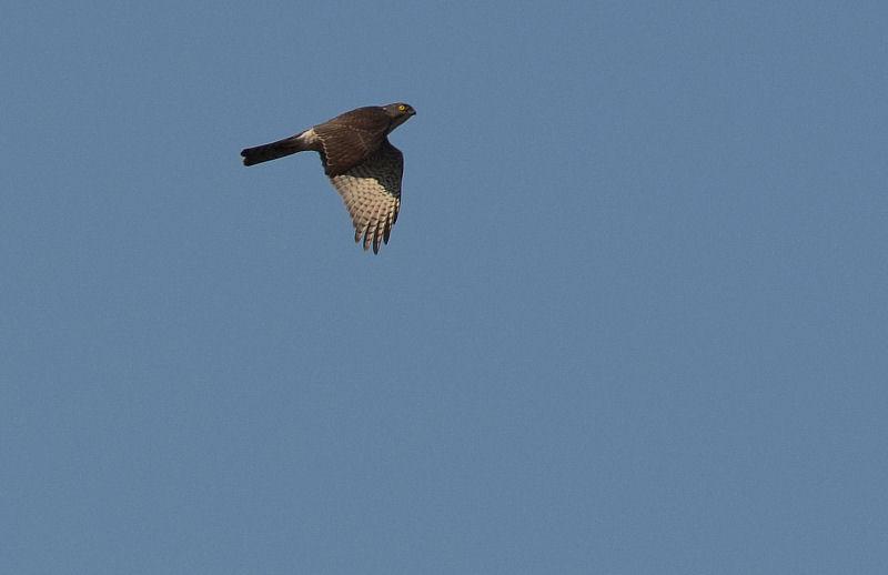 1月中旬 風の強い日は猛禽Day(^^)_b0078795_16242011.jpg