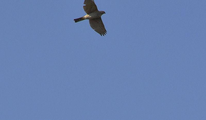 1月中旬 風の強い日は猛禽Day(^^)_b0078795_172411.jpg