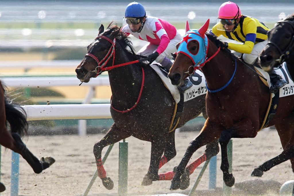 2013年1月19日 京都牝馬S_f0204898_1717137.jpg