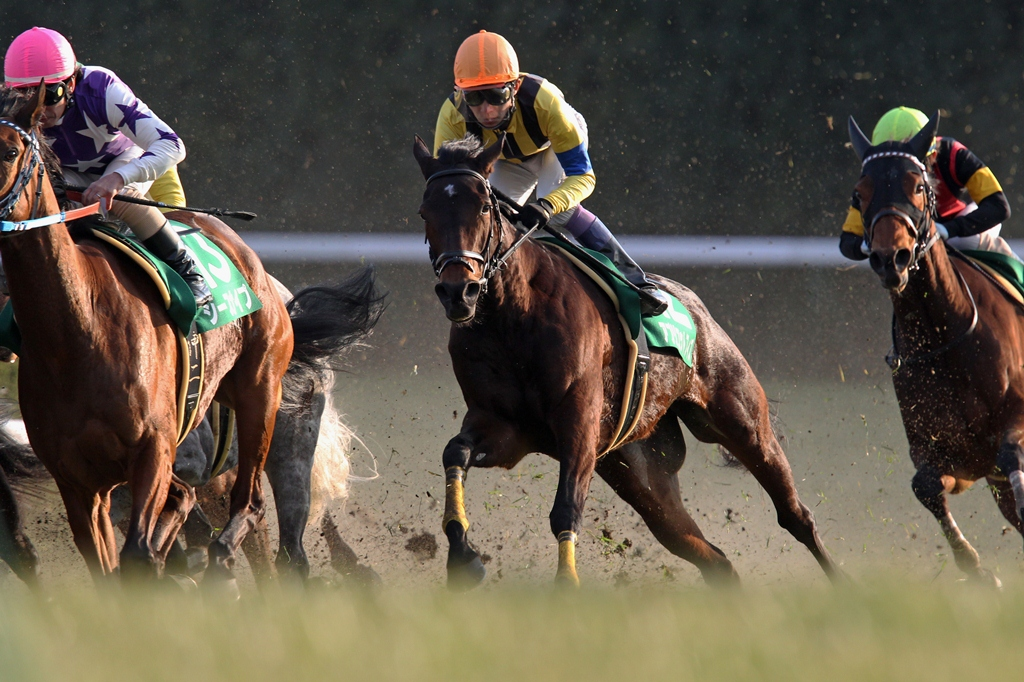 2013年1月19日 京都牝馬S_f0204898_17191681.jpg