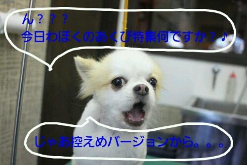 b0130018_1913369.jpg