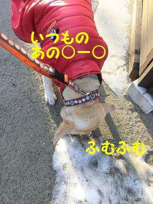 売り切れデシタ_e0222588_17315580.jpg
