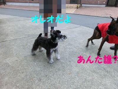 売り切れデシタ_e0222588_17343771.jpg