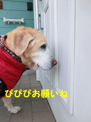売り切れデシタ_e0222588_1735426.jpg