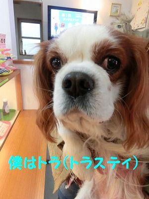 売り切れデシタ_e0222588_17362073.jpg