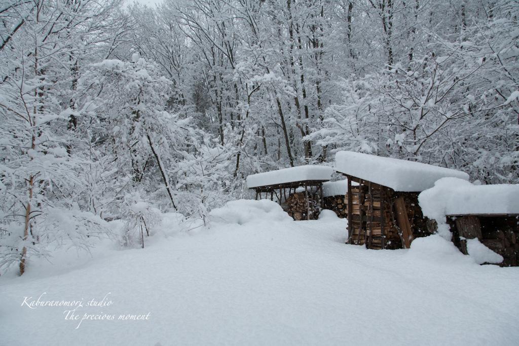 この冬一番の積雪_c0137403_16283161.jpg