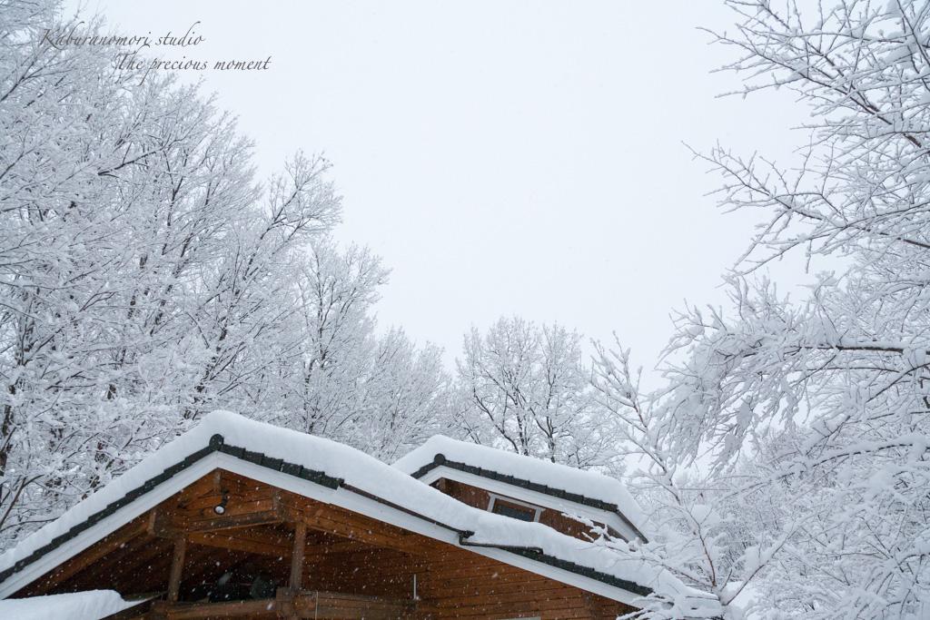この冬一番の積雪_c0137403_16303053.jpg