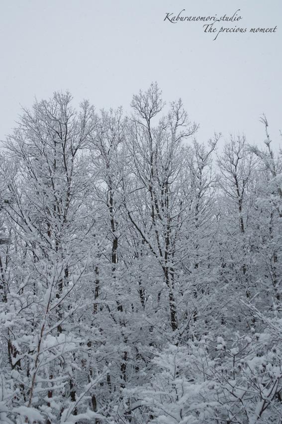 この冬一番の積雪_c0137403_16305221.jpg