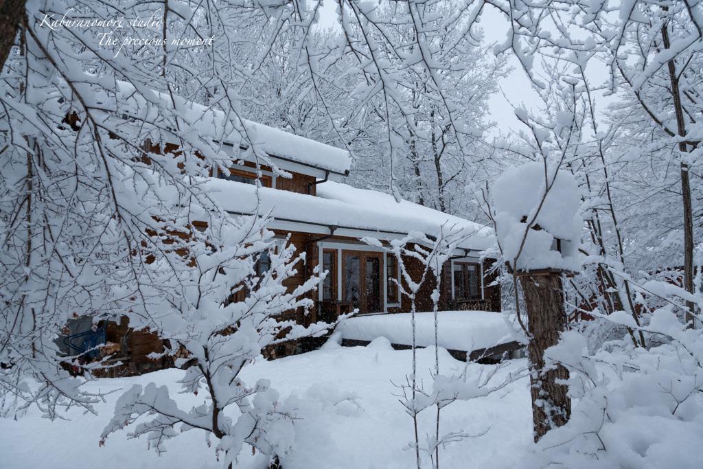 この冬一番の積雪_c0137403_16323024.jpg