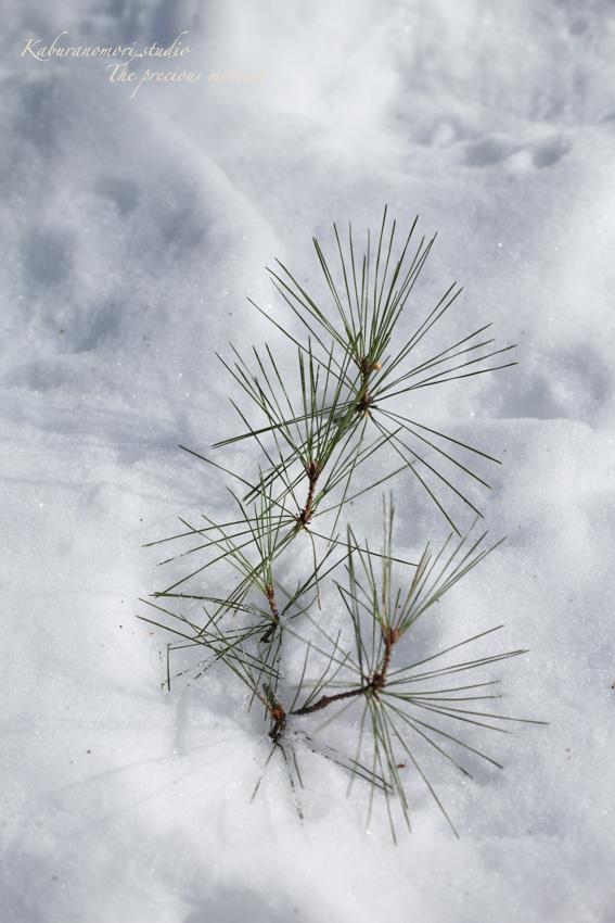 この冬一番の積雪_c0137403_16365913.jpg