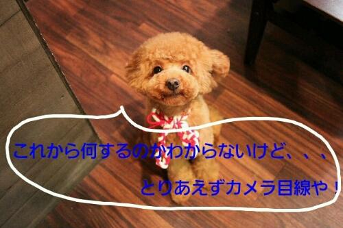 b0130018_2316551.jpg