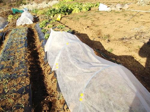 春を待つ、野菜の苗たち...._b0137932_2025236.jpg