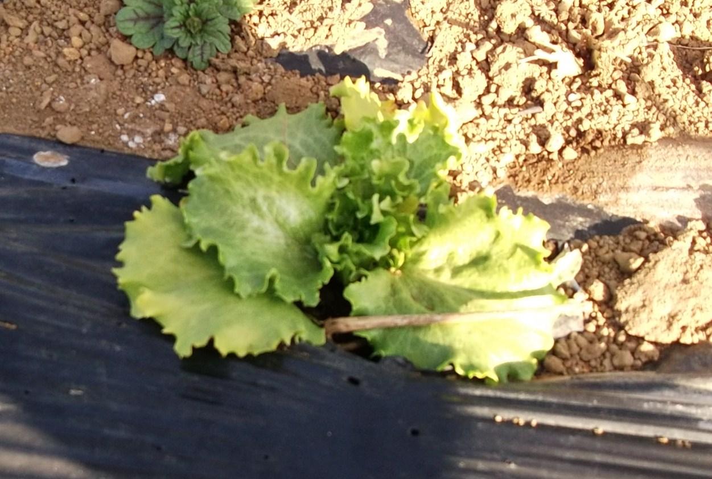 春を待つ、野菜の苗たち...._b0137932_2034696.jpg