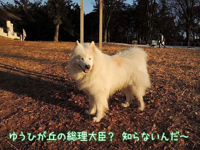日曜おじ散歩_c0062832_7303167.jpg